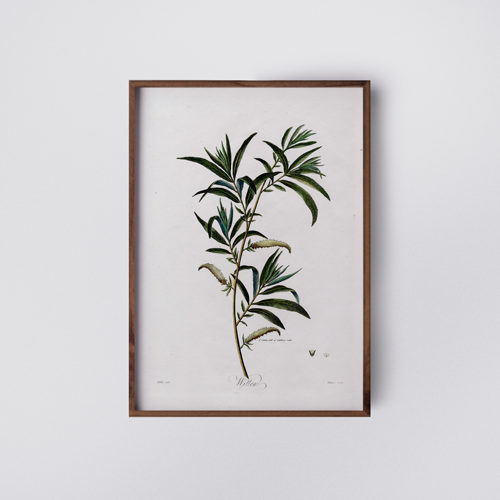 ather-studio-botanic-willow-poster