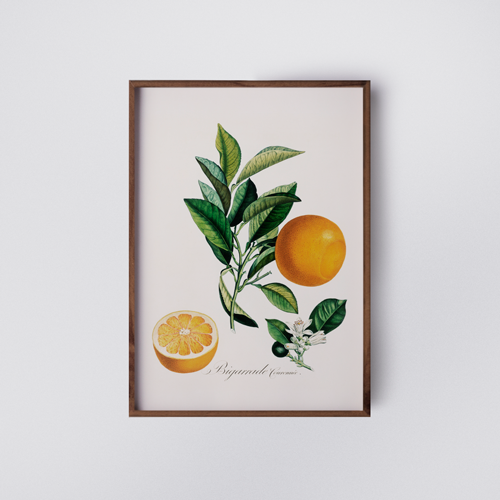 atherstudio-botanical orange - poster